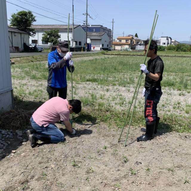 農作業(サツマイモ栽培)